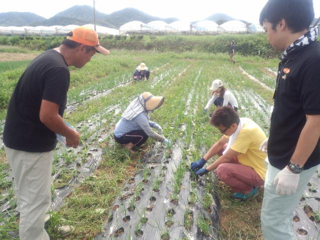 【島根県】益田市 『ますます「ますだ」が好きになる!!農業体験プログラム(11月開催)』の参加者募集!!